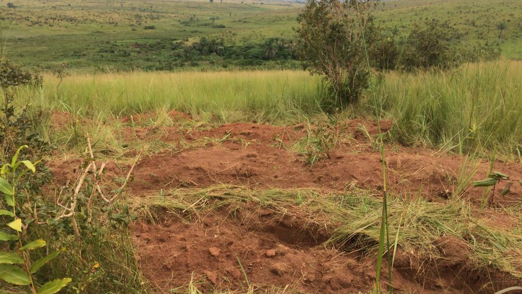 RDC: au moins 8 fosses communes découvertes dans le Kasaï Central